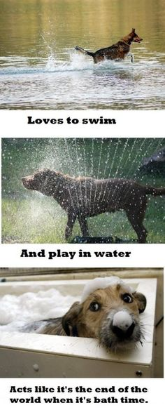 13 Hilarious Memes Of Dog Logic - World's largest collection of cat memes and other animals Funny Dogs, Funny Animals, Cute Animals, Crazy Animals, Silly Dogs, Funny Dog Pictures, Animal Pictures, Random Pictures, Funny Photos