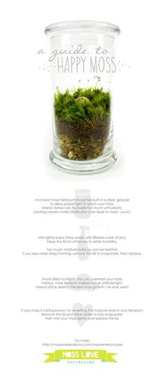 Guide to Happy Moss - Moss Love Terrariums - goodideals wedding Terrarium succulentes Terrarium Vase, Succulent Terrarium, Terrarium Wedding, Indoor Garden, Indoor Plants, Outdoor Gardens, Air Plants, Growing Moss, Growing Plants