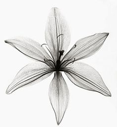 HISTORY OF X-RAY ART X-rays were discovered by Wilhelm Roentgen in and their usefulness in medicine was immediately recognized wo. Water Lily Tattoos, Flower Tattoos, Xray Flower, Flower Art, Water Paint Flowers, Asian Lilies, Types Of Art, Crystal Beads, Wall Art Prints