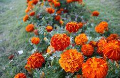 #naranja #naturaleza #flores #inspiración