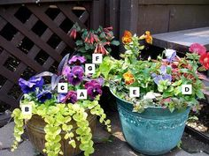 Pictures of Flowers: A = Pansy, B = Creeping Jenny, C = Persian Shield, D= Mimulus, E= Torenia, F = Fuchsia Gartenmeister, G = New Guinea Impatiens