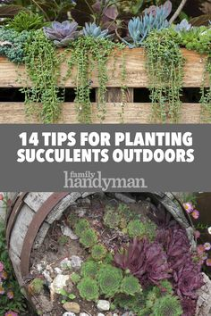 14 Tips for Planting Succulents Outdoors Succulent Rock Garden, Succulent Outdoor, Succulent Landscaping, Succulent Gardening, Flowers Garden, Summer Flowers, Colorful Flowers, Beautiful Flowers, Succulent Care