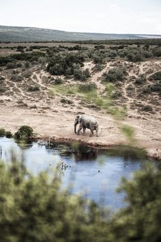 An elegant elephant captured in its natural habitat in Africa Elephant Pictures, Habitats, Digital Prints, My Photos, Beautiful Pictures, Africa, Elegant, Natural, Animals