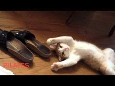 BEST CAT VIDEO: Paco, the cat who does pilates.