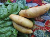 J and A Produce and CSA  Fresh is the Best !!!  Fingerling potatoes and Swiss chard !