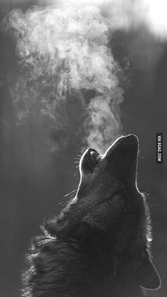 One of the most majestic pictures I have ever seen