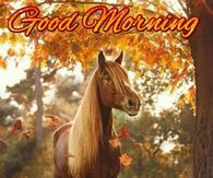 Have a beautiful day, happy tuesday Good Morning Tuesday Wishes, Good Morning Greetings, Good Morning Good Night, Good Morning Quotes, Happy Tuesday Pictures, Happy Tuesday Quotes, Horse Party, Have A Happy Day, Horse Quotes