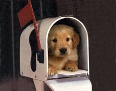 You've got mail! i would be the happiest girl in the world!
