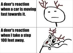 deer rage comic