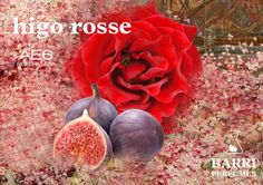 Fragancia: Higo con Rosa. Ideal para aromaterapia, difusor ultrasónicos, etc. Envase de 15 ml. Ref. HIGO ROSSE www.tiendabarriperfumes.es