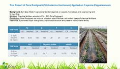 Dora Rootguard the Best Partner of Humic Acids – Doraagri tech Effectively increase soil condition,prevent crops diseases and promote long-term growth  Inhibite soil-borne diseases,prevent continuous cropping obstacles,improve yields effectively  Usage of chemical pesticides can be reduced significantly  One plus one is much greater than two (1+1>2)  Both of humic acids and trichoderma harzianum are environmental friendly and follow international trend in the field.