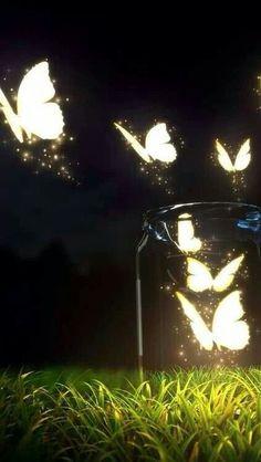 Lite butterflies..
