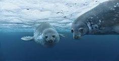 Resultado de imagen para los oceanos y mares del mundo