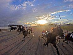 Hollywood Gaming at Dayton Raceway Standardbred Horse, Harness Racing, Camel, Trotter, Horses, Gaming, Hollywood, Animals, Videogames