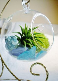 Copious: Seaside Hanging Globe & Stand Air Plant Terrarium Tillandsia Sea Glass Green