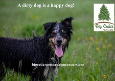 Exclusive Excursions – Big Cedar Pet Care - Pet Sitting and Dog Walking Services Pet Odor Neutralizer, Dog Walking Services, Dog Smells, Pet Odors, Happy Dogs, How To Get Rid, Large Dogs, Dog Owners, Pet Care