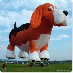 """The """"Regal Beagle"""" hot air balloon Air Balloon Rides, The Balloon, Hot Air Balloon, Balloons Galore, Helium Balloons, Expo 67 Montreal, Air Balloon Festival, Balloon Flights, Air Ballon"""