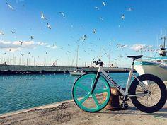 @Regrann from @wolfbotts - @dafnefixed @leaderbikeusa @aerospokeofficial @vittoriatires @fixieapp @fixed.boys @fixed.gear.bikes @scattoitaliano @fixed_sensation @allfixedgear #fixedgear #fixedbike #bike #cycle #onegear #trackbike #dafne #dafnefixed #leaderbike #irideleader #leader721 #leader725 #usa #leader #aerospoke #vittoriatires #bricklane #rimini #igers #igersitalia #igersrimini #cesena #igerscesena #skids #winter #allfixed #allfixedgear #slamthatstem by bikenaterra