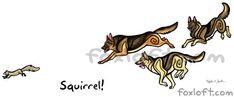 Squirrel! German Shepherd Dogs by Foxfeather248.deviantart.com on @deviantART