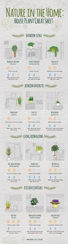 Never question how much sunlight your spider plant needs again. Never question how much sunlight your spider plant needs again. Never question how much sunlight your spider plant needs again. Plantas Indoor, Decoration Plante, Diy Decoration, Art Decor, Plant Needs, Finding A House, My New Room, Cheat Sheets, Houseplants