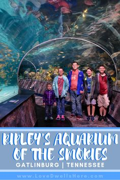 Located in the heart of the Smoky Mountains, Ripley's Aquarium of the Smokies is one of the most popular attractions in Gatlinburg and for good reason! Gatlinburg Tennessee Cabins, Gatlinburg Vacation, Tennessee Vacation, Tennessee Attractions, Alaska Travel, Canada Travel, Alaska Cruise, Travel With Kids, Family Travel