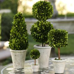 Preserved Boxwood Topiaries - Cone Shaped Topiary - CARLYLE AVENUE
