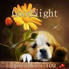 Good Night Puppy good night good night photos good night sayings good night image good night pic good night blessing Good Night Beautiful, Cute Good Night, Good Night Messages, Good Night Sweet Dreams, Good Night Image, Good Morning Good Night, Day For Night, Good Night Moon, Good Night Prayer