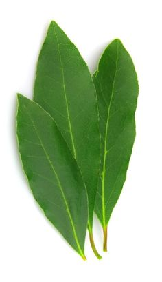☆ Bay Leaf: Sacred to the god Apollo. Used for protection, good fortune, success, purification, strength, healing and divination. It is traditional to write wishes on the leaves and then burn them to make them come true. Also used in charms when placed under the pillow will induce prophetic dreams. Place a leaf in the corner of each room in the house to protect all that dwell there. Carry bay leaf for protection charm to protect yourself against magical attack :¦: Image: Baldor Specialty Foods ☆