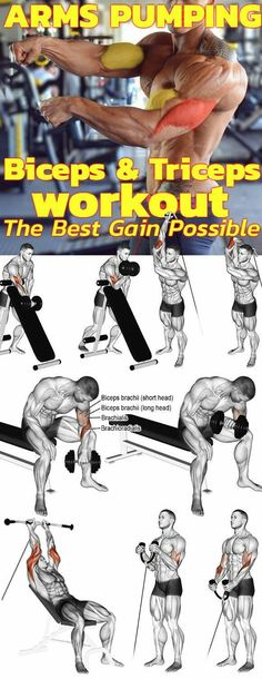 Find the best pump-arm exercises for big, strong biceps and triceps . Suchen Sie die besten Pump-Arm-Übungen für großen, starken Bizeps und Trizeps… Are you looking for the best pump arm exercises for big, strong biceps and triceps? Gym Workout Tips, Weight Training Workouts, Fitness Workouts, Arm Day Workout, Best Arm Workouts, Chest Workouts, Biceps And Triceps, Biceps Workout, Chest And Tricep Workout