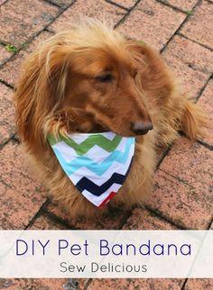 Sew Delicious: DIY Pet Bandana Tutorial & Vitapet Treats
