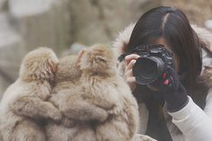The adorable images of the trio were taken at Jigokudani Monkey Park in Japan. Tourists flock to the attraction to see snow monkeys bathing in the parks hot springs. Ashtanga Yoga, Jigokudani Monkey Park, Monkey 2, Snow Images, Three Best Friends, Famous Photographers, Cute Japanese, Vintage Photographs, Cat Memes