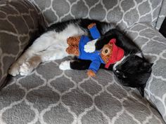 Gulliver napping with his Paddington Security Blanket, Picture Video, Shelter, Cute Pictures, Kids Rugs, Kitty, Puppies, Pets, Tuxedo Cats