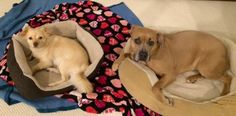 RC Update: Jojo (RC) is doing great! She's a good girl and seems to be loving her new home and Buddy Jim. Here is a picture of the two. Thanks for all your help with everything!