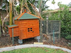 We purchased our three chicks before we thought too much about the coop and we thought we had plenty of time to build a small coop. Hen House, Backyard Chickens, Chicken Coops, Shed, Tropical, Outdoor Structures, Community, House Styles, Cute