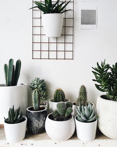 20 Removable Products for your Rental – Cute Apartment Decor - New ideas Succulent Arrangements, Planting Succulents, Planting Flowers, Room Paint Colors, Paint Colors For Living Room, Cute Apartment Decor, Orquideas Cymbidium, Cactus Plante, Plant Aesthetic