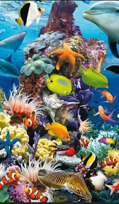 A topnotch fish and ocean life Underwater Painting, Underwater Life, Underwater Animals, Under The Ocean, Sea And Ocean, Colorful Fish, Tropical Fish, Ocean Artwork, Ocean Mural