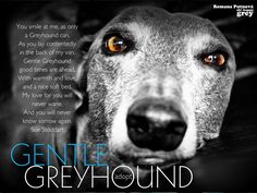 Beautiful <3 ~ Gentle Greyhound  by Sue Stoddart and Oh Happy Grey!