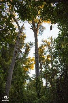 #nature #aesthetic #newzealand #beautiful #wild #photography #dof Wild Photography, Nature Aesthetic, New Zealand, Content, Illustration, Plants, Beautiful, Illustrations, Plant
