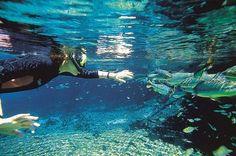 10. Jardim, Mato Grosso do Sul - O destaque aqui fica para a Lagoa Misteriosa. Localizada dentro de uma caverna, ela possui a visibilidade incrível de 50 m e permitirá que você observe a vida subaquática de pertinho.  Foto Leo Feltran.