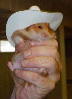 Hamster in a cowboy hat -- they are so cute, but so mean.