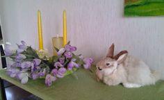 Bunny and flowers Motoristin Mutsi at home and garden
