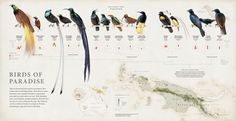 bird of paradise - Google Search