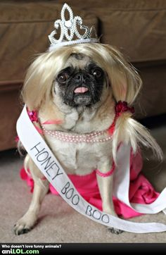this is a pug. a pug dressed up like honey boo boo. Amor Pug, Pugs In Costume, Dog Costumes, Funny Shit, Funny Cute, Hilarious, Funny Dogs, Funny Animals, Cute Animals