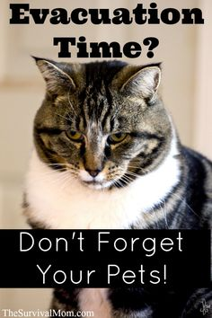 Make plans now to evacuate your pets and their supplies in an emergency. | via www.TheSurvivalMom.com
