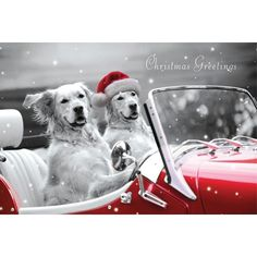 Best Seller. This fun photographic card shows two Golden Retrievers sat in a red open top car, one driving and one in the passenger seat. The passenger has a red Santa hat on its head and above the car are the words 'Christmas Greetings'. The card is black and white apart from the card and hat which are red. Pack of 10 cards, 100mm x 152mm.