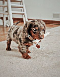 Super Cute Puppies, Baby Animals Super Cute, Cute Wild Animals, Cute Baby Dogs, Baby Animals Pictures, Cute Funny Dogs, Cute Animal Photos, Cute Dogs And Puppies, Cute Little Animals