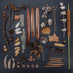 ∷ Variations on a Theme ∷ Collection of  garden finds
