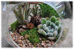 Succulent Terrarium Kit Woodsy2  Large 7 by SucculentsAndMore1