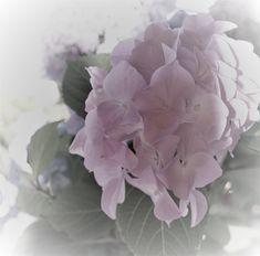rosali.biz