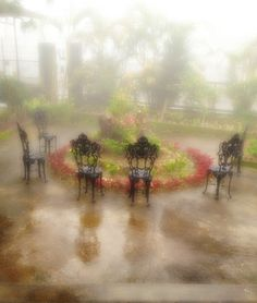 dream state by Ryllah Epifania Berico - in the blissful rain   fog envelops my tired soul  the mind's eye at rest
